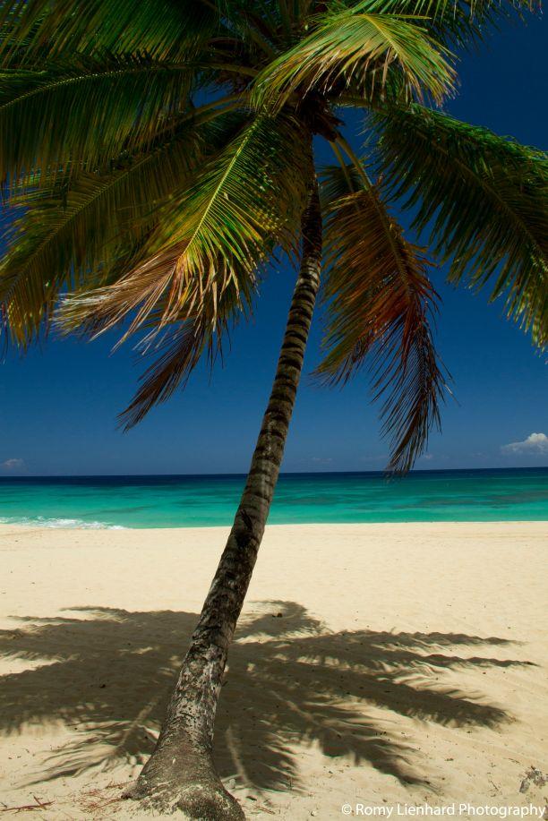 farbige palme