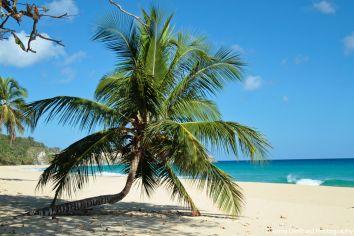traumpalme playa grande