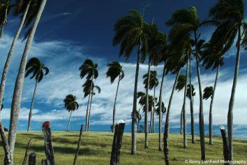 verwehte palmen farbig